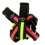 Flashing dog collar for dogs