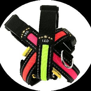 Flashing dog collar for dogs