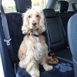 dog car seat cover for dogs