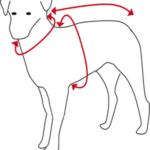 Hotterdog sizes