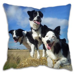 Country Working Dog Collies Cushion