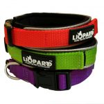 Padded Nylon Collar & Lead- Dog on a Lead set