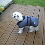 Luxury Dog Coat